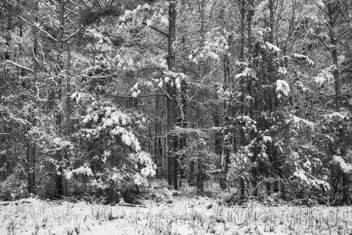 Wooded Winter Wonderland