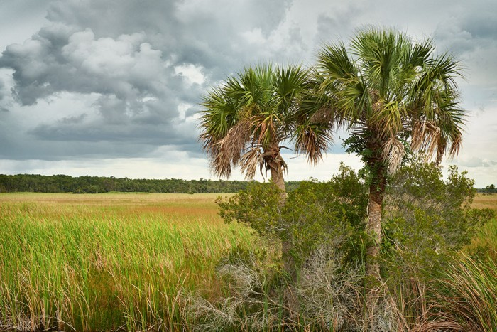 Palm in the Swamp